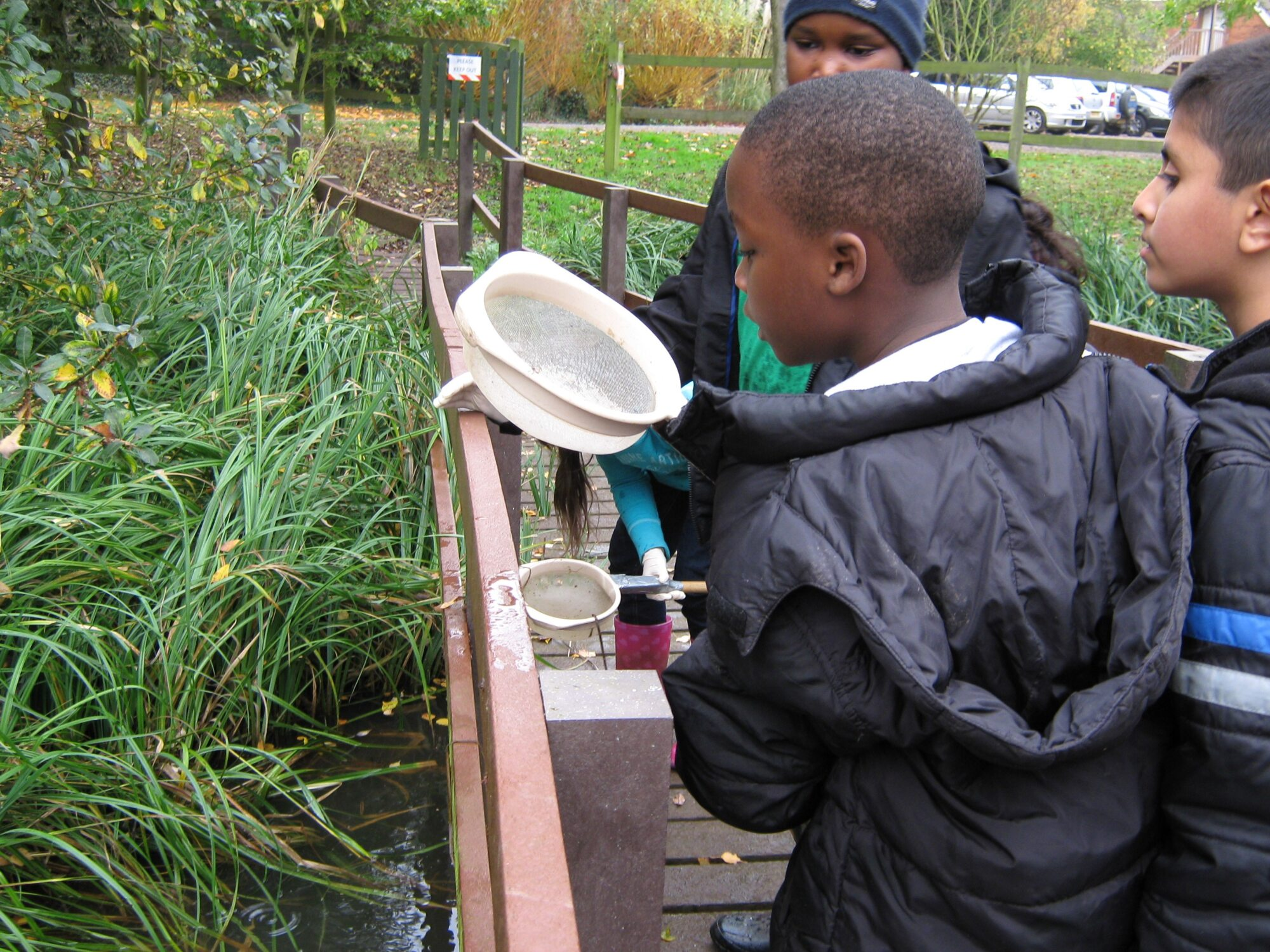 Cardfields pond dipping