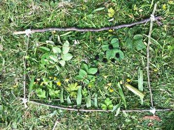 Learning bush craft
