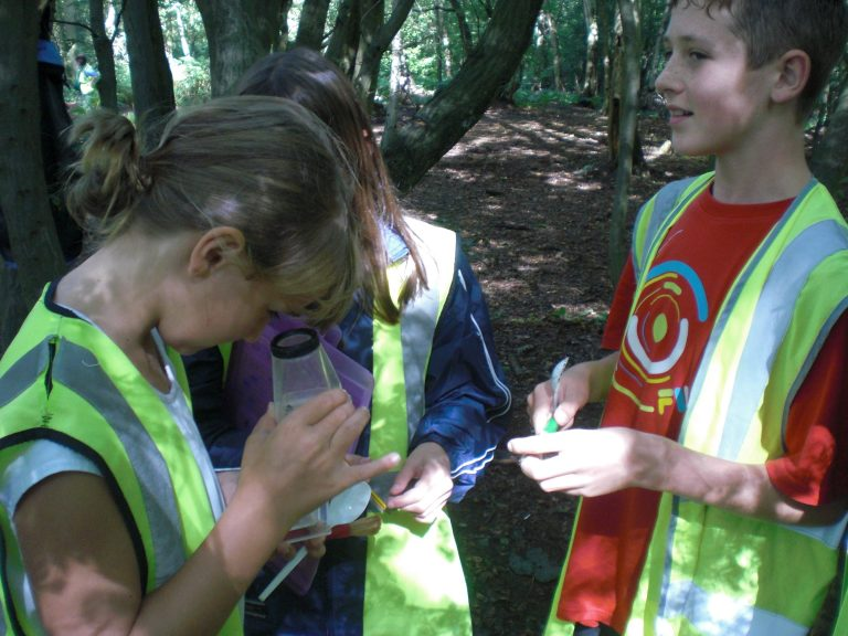 Cardfields Woodland study